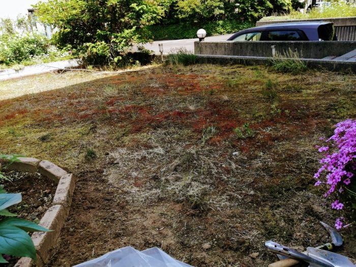 雑草苔だらけの庭